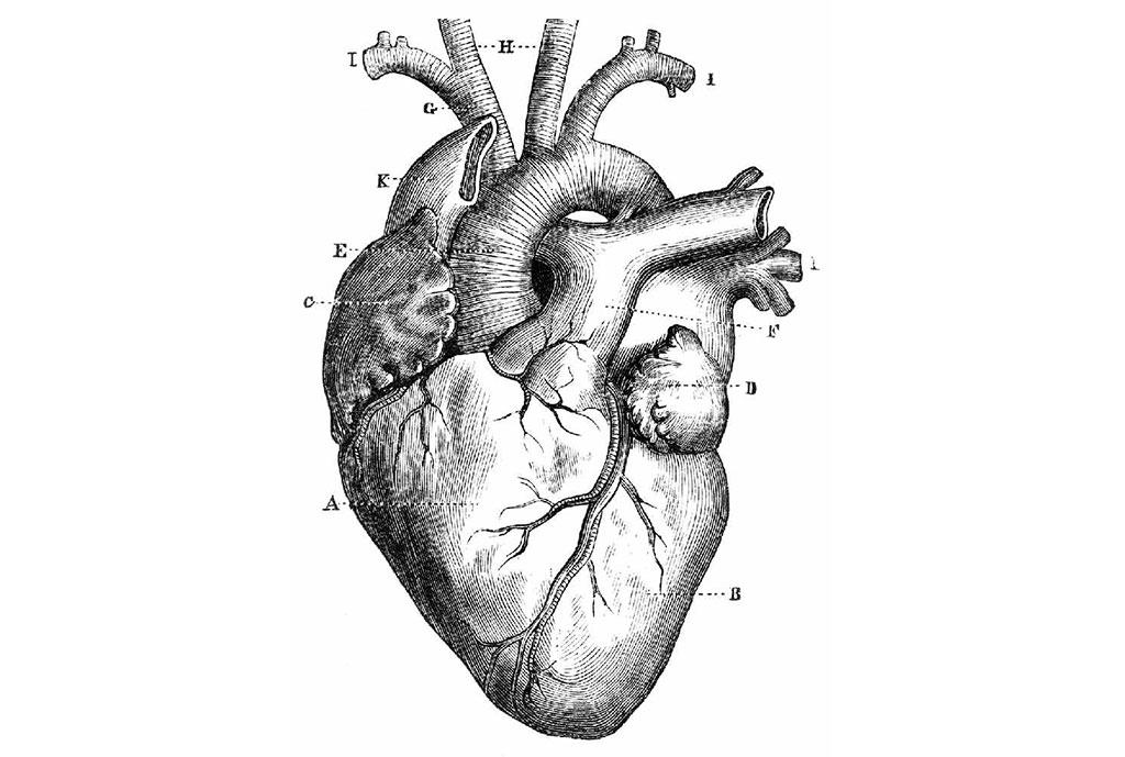 El Corazón NO es una Bomba